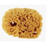 Natural sea sponge used for faux painting.