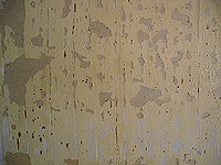 Paint scraped from wall. Damage caused by moisture.