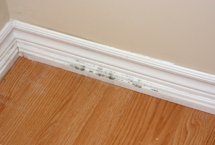 Preventing Mold And Mildew Growth